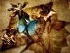 Free Abstract Wallpaper : Butterfly - Collage