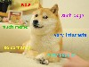 Free Abstract Wallpaper : Doge