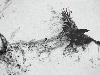 Free Abstract Wallpaper : Smoke Crow