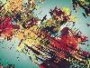 Free Abstract Wallpaper : Struggle