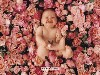Free Artistic Wallpaper : Anne Geddes
