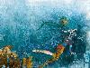 Free Artistic Wallpaper : Gabriel Pacheco