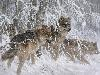 Free Artistic Wallpaper : Larry Fanning - Edge of Winter