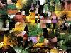 Free Artistic Wallpaper : Paul Klee - Landscape and the Yellow Church Tower