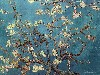 Free Artistic Wallpaper : Van Gogh - Almond Branches in Bloom