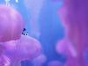 Free Cartoons Wallpaper : Finding Dory