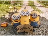 Free Cartoons Wallpaper : Minions