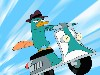 Free Cartoons Wallpaper : Phineas and Ferb - Perry