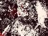 Free Comics Wallpaper : Berserk