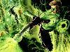 Free Comics Wallpaper : Hal Jordan