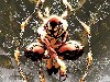 Free Comics Wallpaper : Iron Spider