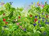 Free Fantasy Wallpaper : Colorful Garden