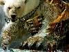 Free Fantasy Wallpaper : Giant Bear