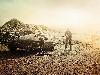 Free Movies Wallpaper : Mad Max - Fury Road