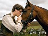 Free Movies Wallpaper : War Horse
