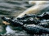 Free Nature Wallpaper : Alligators