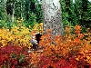 Free Nature Wallpaper : Autumn