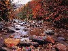 Free Nature Wallpaper : Autumn Brook