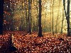 Free Nature Wallpaper : Autumn - Forest