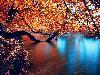 Free Nature Wallpaper : Autumn