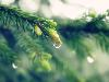 Free Nature Wallpaper : Water Drops