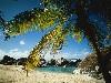 Free Nature Wallpaper : Beach