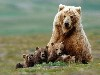 Free Nature Wallpaper : Bear Family