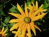 Free Nature Wallpaper : Beautiful Flower