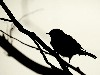 Free Nature Wallpaper : Bird