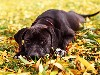 Free Nature Wallpaper : Puppy