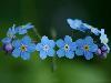 Free Nature Wallpaper : Blue Cinquefoil