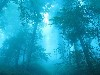 Free Nature Wallpaper : Blue Forest
