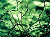 Free Nature Wallpaper : Branches