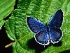 Free Nature Wallpaper : Butterfly
