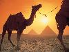 Free Nature Wallpaper : Camels and Pyramids