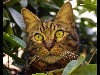 Free Nature Wallpaper : Cat