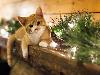 Free Nature Wallpaper : Cat - Christmas