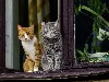 Free Nature Wallpaper : Cats - At Window