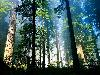 Free Nature Wallpaper : Chinese Forest