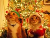 Free Nature Wallpaper : Cats - Christmas