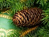 Free Nature Wallpaper : Christmas - Pine