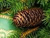 Free Nature Wallpaper : Christmas - Pine
