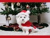 Free Nature Wallpaper : Christmas - Puppy