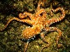 Free Nature Wallpaper : Common Octopus