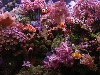 Free Nature Wallpaper : Coral Reef