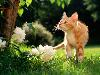 Free Nature Wallpaper : Curious Cat