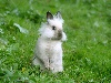 Free Nature Wallpaper : Cute Bunny