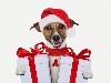 Free Nature Wallpaper : Dog - Christmas Gifts