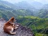 Free Nature Wallpaper : Dog - Landscape