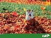 Free Nature Wallpaper : Dog